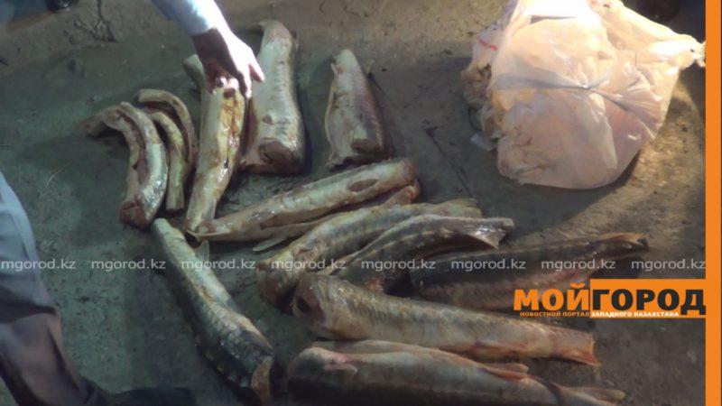 Около 100 кг осетрины пытались сбыть на рынке в Атырауской области