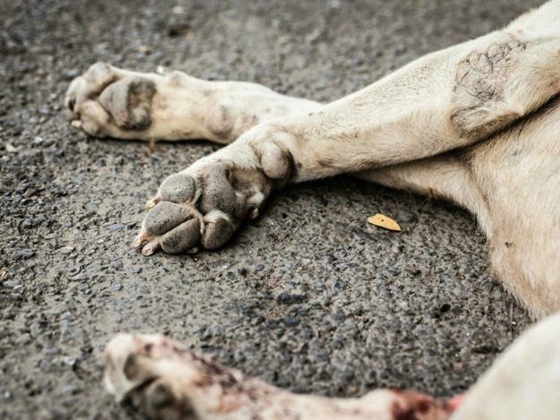 Новости Атырау - За сбитую на дороге собаку водителя в Атырау лишили прав
