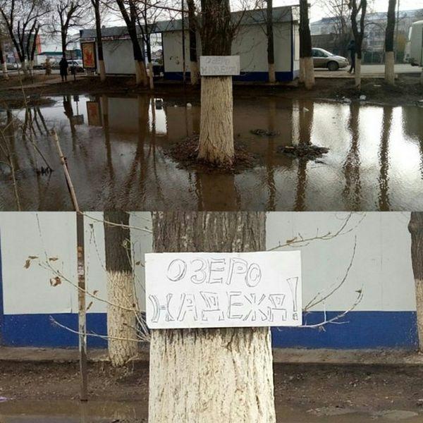 Новости Уральск - Вывеска на дереве развеселила уральцев