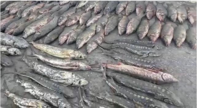 Новости Атырау - Житель Атырау пытался вывезти запрещенную рыбу из приморского села (видео)