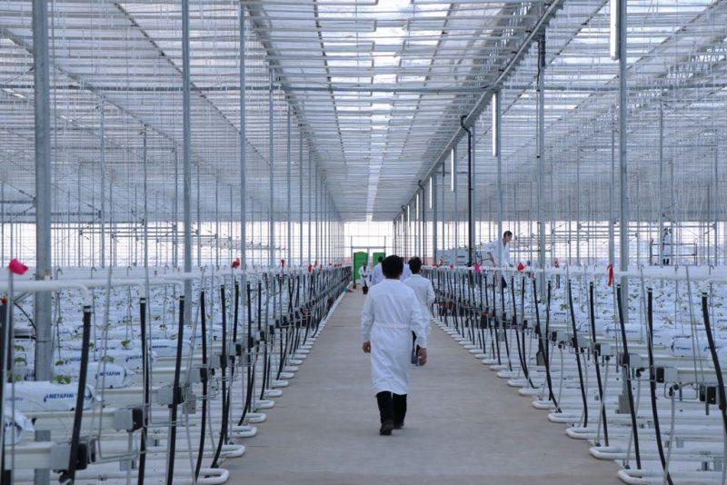 Новости Атырау - В Атырауской области запустили теплицу площадью 2 гектара