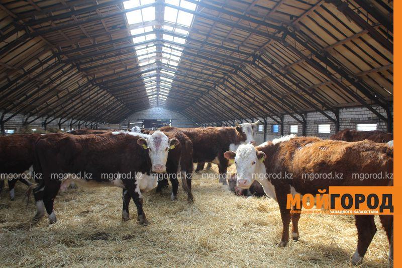 Новости Уральск - Светоотражающие ленты для домашних животных стали производить в ЗКО