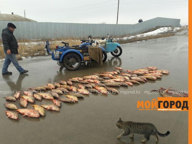 В пригороде Атырау задержаны браконьеры на двух мотоциклах с рыбой
