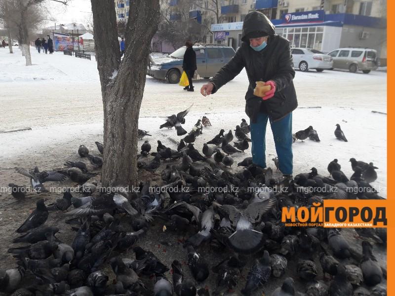300 голубей кормит ежедневно труженица тыла в Атырау (фото, видео)
