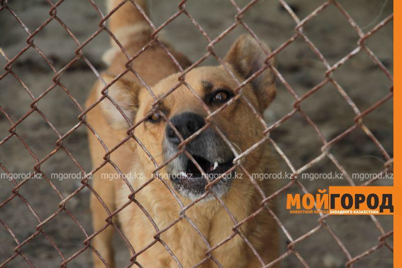 В Актюбинской области у домашних животных выявили бешенство