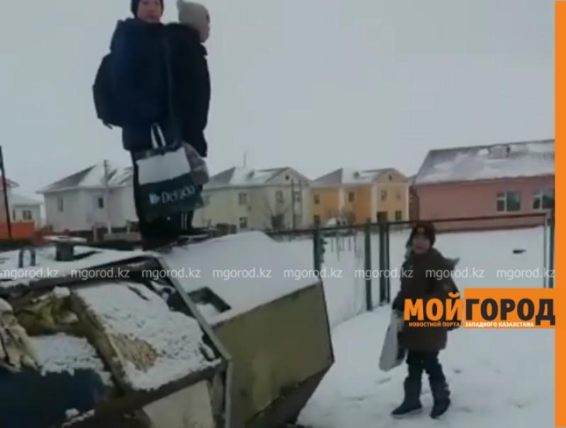 Новости Атырау - В Атырау стая бродячих собак напугала учеников у ворот школы