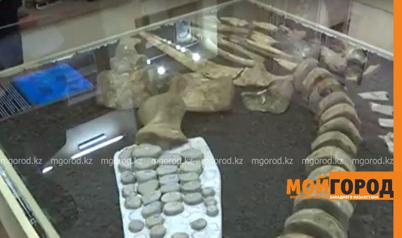 В ЗКО откопали прародителя динозавров