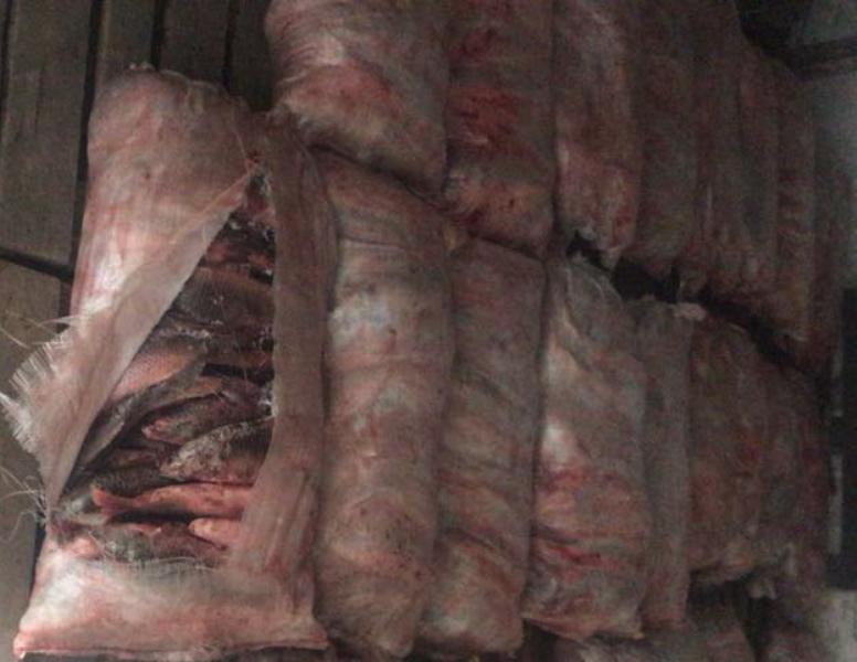 Новости Атырау - Житель Атырау, перевозивший полтонны рыбы, отделался мелким штрафом