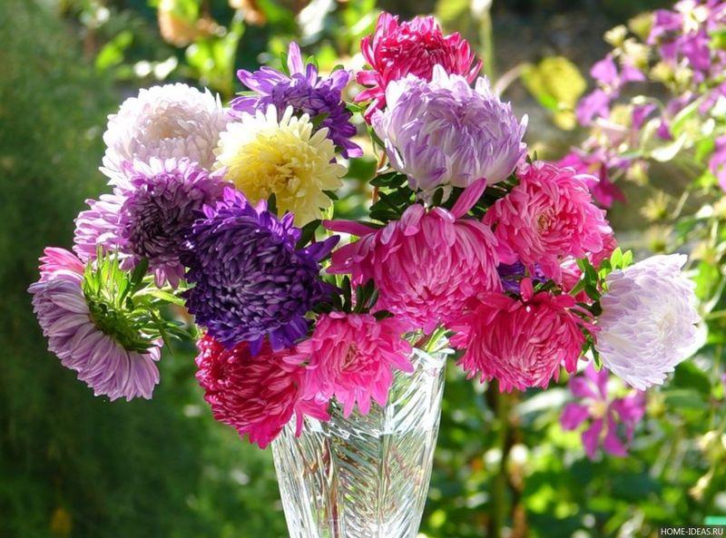 Многолетние цветы каталог и описанием