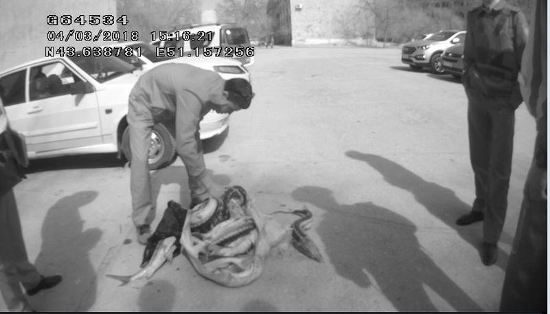 Более 200 кг осетра изъяли полицейские Мангистауской области