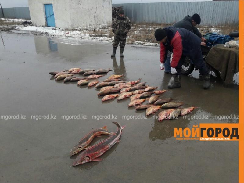 Новости Атырау - В Атырау сотрудники рыбинспекции устроили погоню за браконьерами
