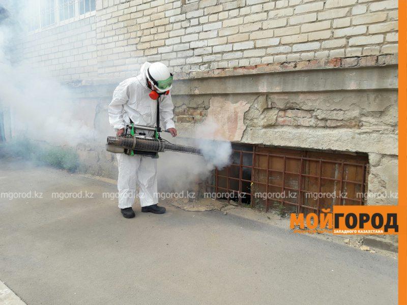 Новости Атырау - В Атырау борьбу с комарами будут вести в течение 8 месяцев