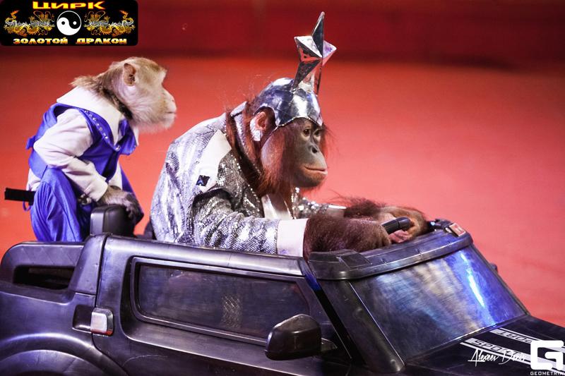 Новости Уральск - Цирк «Золотой дракон» приглашает уральцев на захватывающее представление