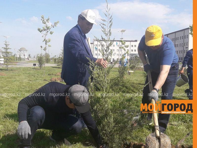 В ЗКО чиновники посадят деревья