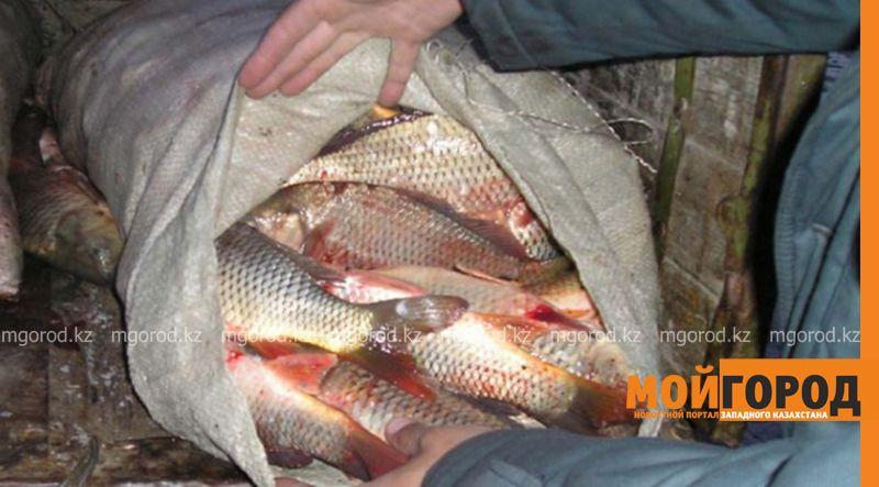 Более тысячи нарушений природоохранного законодательства выявлено на западе Казахстана В ЗКО выявлено 26 фактов незаконной добычи рыбы