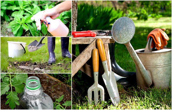 Сад и огород: полезные советы