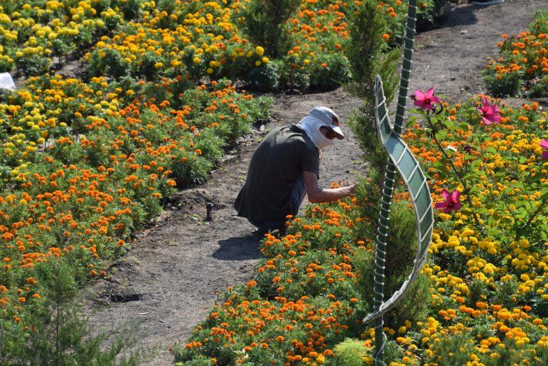 Новости Атырау - В Атырау 12 тысяч квадратных метров земли засадят экзотическими цветами