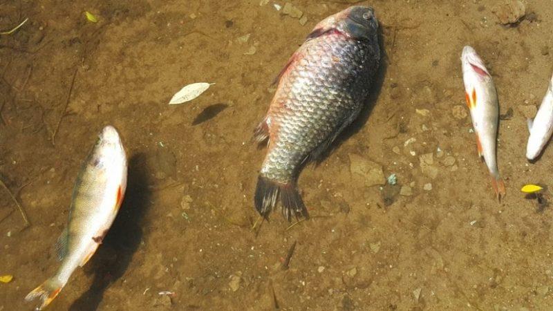 Новости Атырау - Из-за сильной жары в Атырауской области гибнет рыба