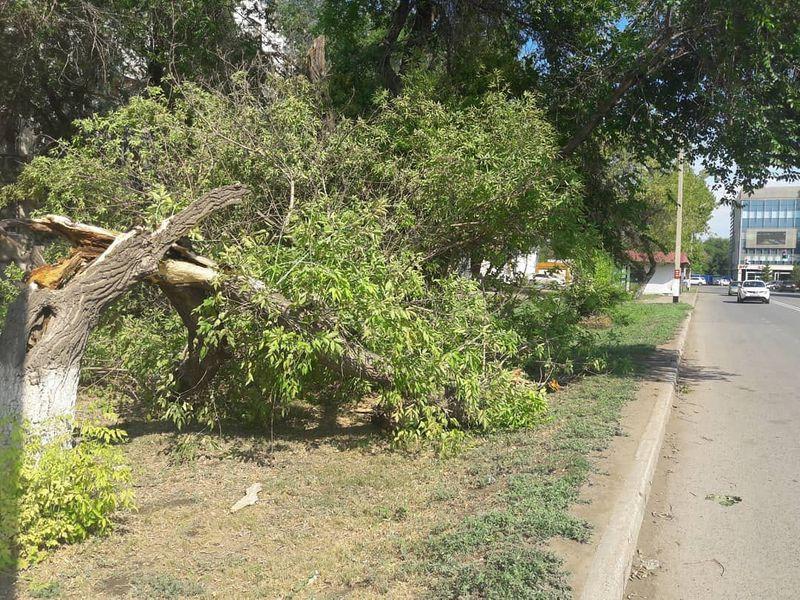 В Уральске во время урагана повалило 23 дерева