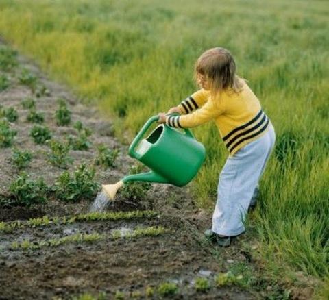 Новости PRO Ремонт - Поливать огород надо умеючи.