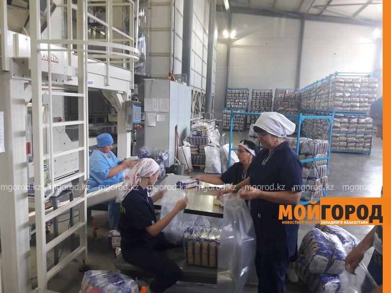 Новости Уральск - ЗКО закупает зерно с северных областей Казахстана