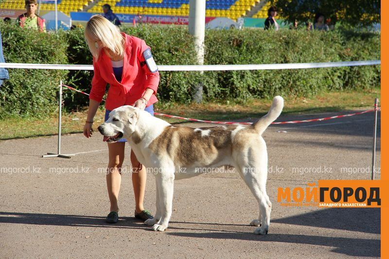 Новости Уральск - Выставка собак проходит в Уральске (фото)