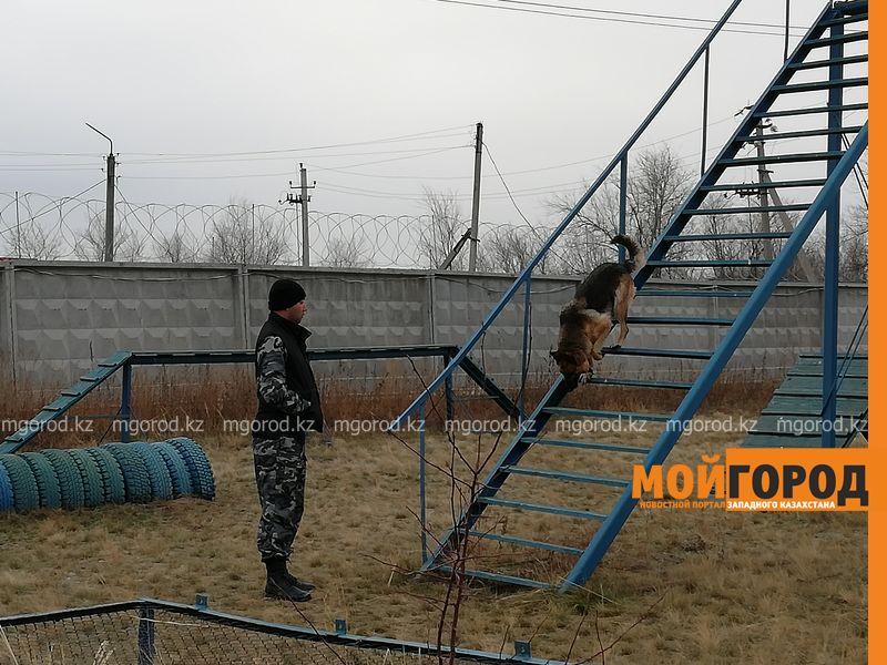 Новости Уральск - Два убийства в ЗКО раскрыли служебные собаки