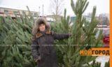 В Уральске началась продажа елок: где и почем купить?