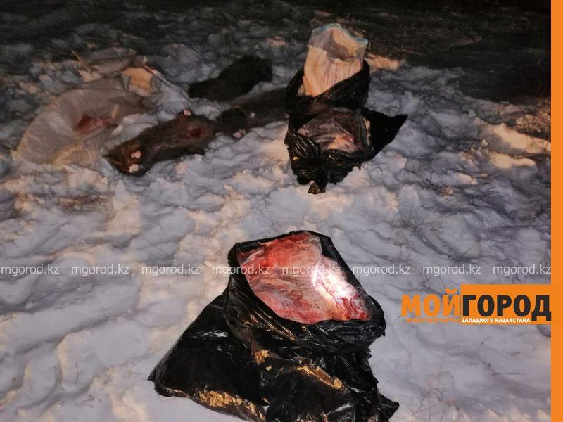 Новости Уральск - Туши кабанов и головы сайгаков обнаружили в степи сотрудники теринспекции (фото)