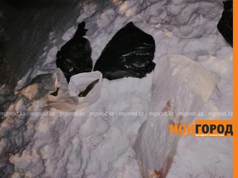 Туши кабанов и головы сайгаков обнаружили в степи сотрудники теринспекции (фото)