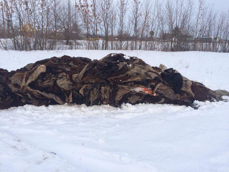 Новости Уральск - Мужчина выгрузил 6 тонн шкур КРС на территории дачного общества