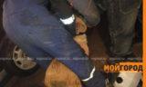 Брал собак из приюта и убивал их: уральца подозревают в жестоком обращении с животными