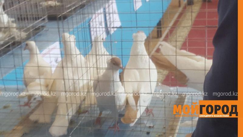 Выставка-ярмарка голубей в Атырау, Казахстан, 23.03.2019г.