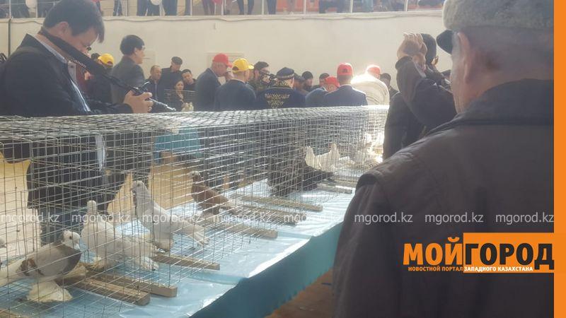 Новости Атырау - Первая выставка голубей проходит в Атырау