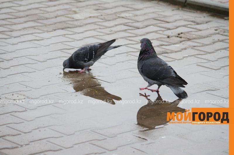 На западе Казахстана ожидаются дожди