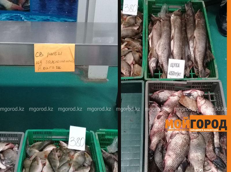 Новости - Жители Атырау боятся покупать рыбу, выловленную в Урале