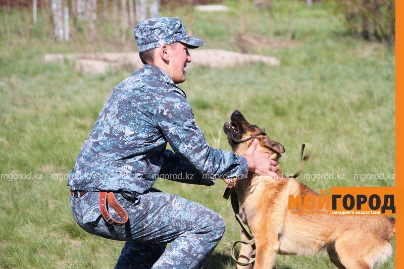 Новости Уральск - Убийства, наркотики, кражи: какие преступления помогают раскрывать служебные собаки в Уральске (фото)