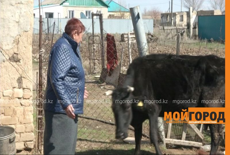 В Актюбинской области сельчанам задолжали за молоко