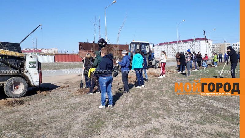 Новости Уральск - Более пяти тысяч саженцев высадили в Бурлинском районе