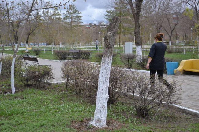 Новости Актау - В Актобе оригинально побелили деревья