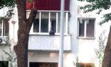 В Актау везли медвежонка, выглядывающего из балкона многоэтажки в Уральске