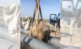 Застрявшего между трубами верблюжонка спасли нефтяники (видео)
