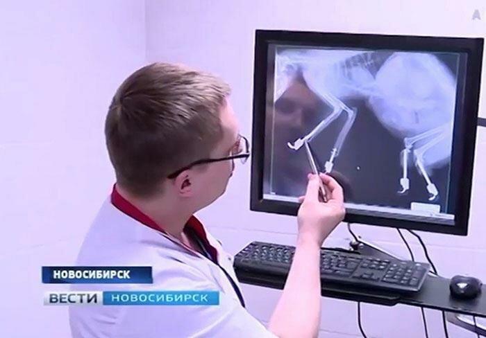Новости Актау - Трогательное видео: первая прогулка кота начетырех протезах