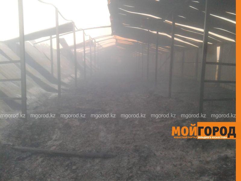 Новости Уральск - Загон для скота площадью 700 квадратных метров сгорел у фермера в ЗКО