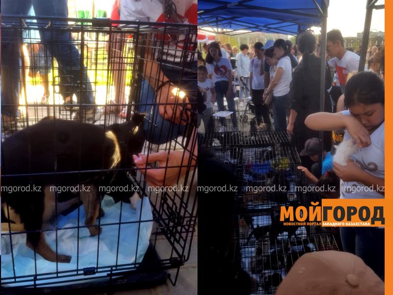 Новости Атырау - Акция по сбору корма и теплых вещей для животных прошла в Атырау