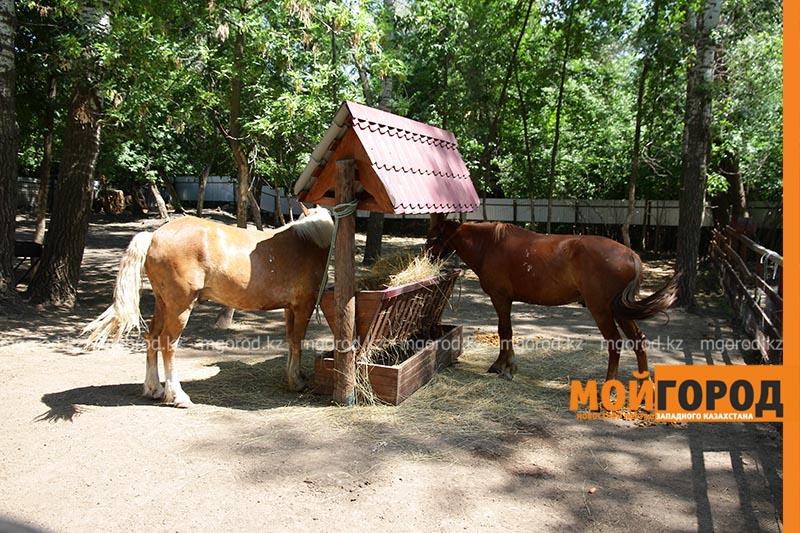 Новости Уральск - Лошадь укусила двоих детей в Уральске