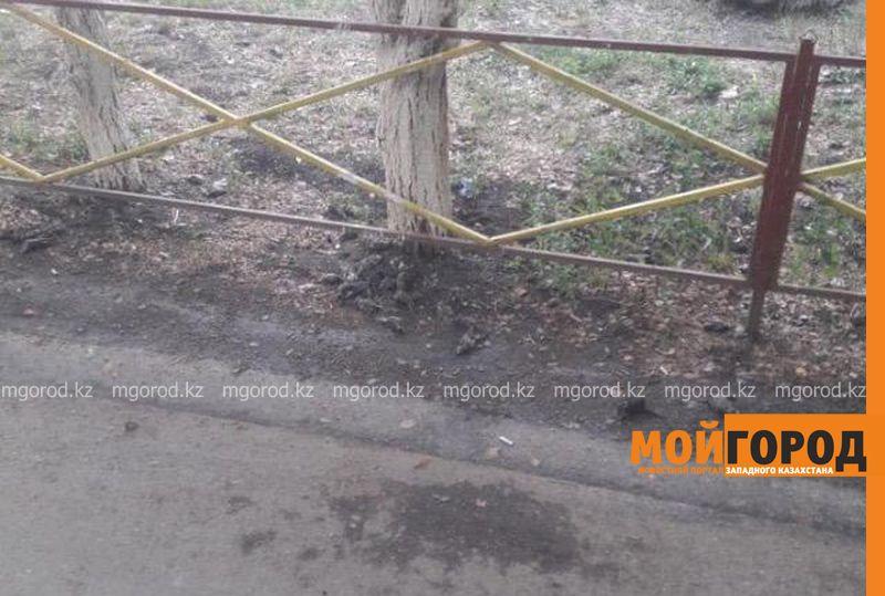 Новости Уральск - В Аксае массово погибли воробьи