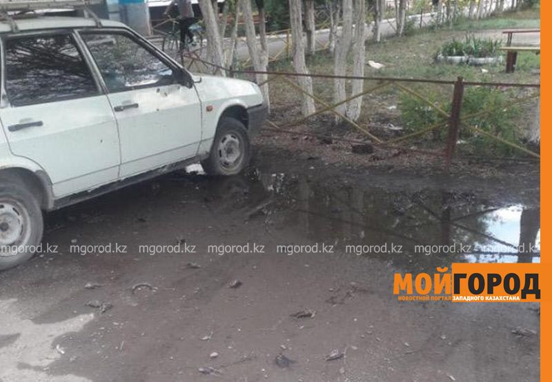 Министр экологии РК поручил определить причину массовой гибели воробьев в Аксае