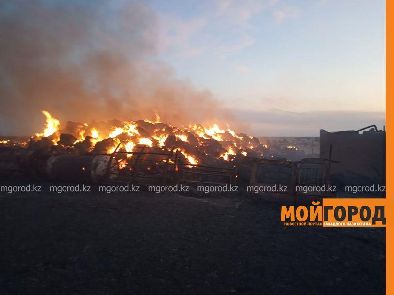 Более 100 голов скота погибло при пожаре в ЗКО