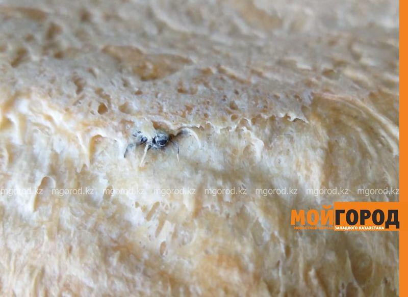 Муху в хлебе обнаружила жительница Уральска